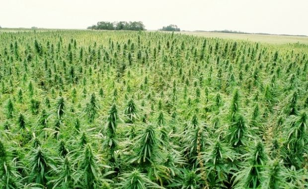 Proposed Bill Would Legalize Hemp in US