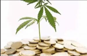 Public Companies, Publicly Traded Companies, MED, Colorado Marijuana Enforcement Division, Colorado Cannabis, Cannabis Investment