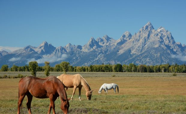 Wyoming, landscape, nature, wilderness, mountain, horses, meadow