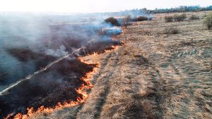 wildfire, forest, field, fire, dry, farm, crop, disaster